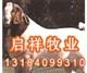 波爾山羊的市場價格波爾山羊種羊價格安徽波爾山羊養殖