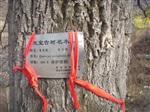 供橡树苗木150万株