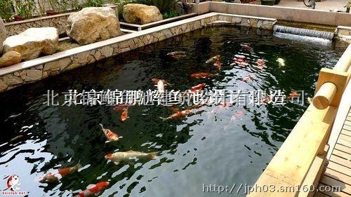鱼池过滤系统设计 生物过滤系统 锦鲤鱼池建造过系