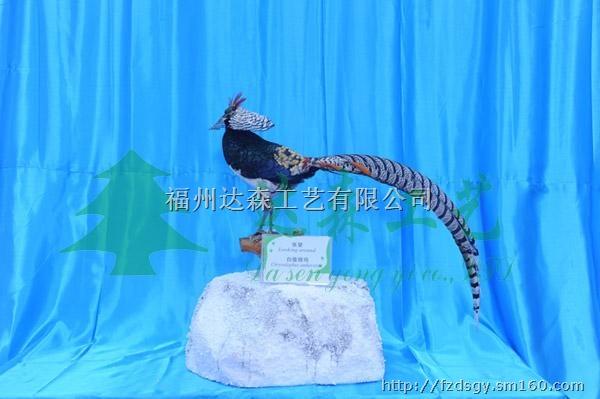 上海动物标本采购 福建动物标本采购