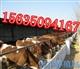 湖北肉牛養殖場