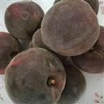 桃树品种苗价格 黑桃苗 黑桃苗木