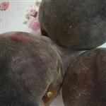黑桃苗哪個品種好 黑桃 黑桃樹苗價格