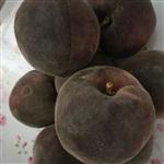 桃樹新品種 黑桃 黑桃苗良種