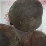 桃樹優良品種 新品種桃苗 黑桃樹苗批發
