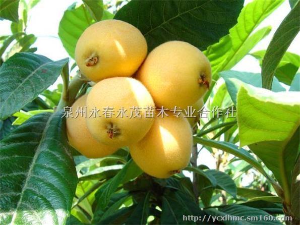 小樱桃菠萝花钩针图解