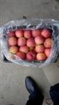 2016年陕西红富士苹果价格/冷库红富士苹果批发价