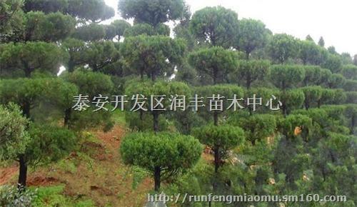 亚热带常绿,落叶阔叶混交林地带和中亚热带常绿阔叶林地带,多松,杉
