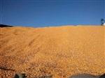 旺川求购:玉米、大豆、高粮、棉粕、大麦、麸皮、肉骨