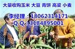 高价收购菜籽饼小麦,垄上收购大豆高粱(优质厂家)