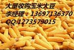 大量收购玉米小麦