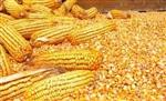 汉江水产养殖长期求购玉米大豆豆粕豆饼菜粕棉粕等饼粕