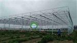 歌珊温室长葛市连栋PC板-玻璃温室 育苗项目