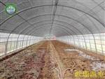 歌珊温室蔬菜大棚怎样预防病虫的侵害