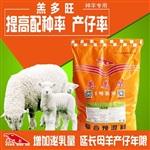 羔羊軟癱問題怎么處理小羊飼料配方
