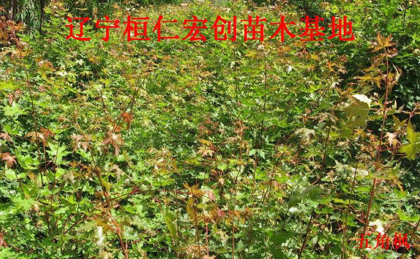 产各地,生于山坡,林中,有些庭园作观赏树种栽培;广布于东北,华北,西
